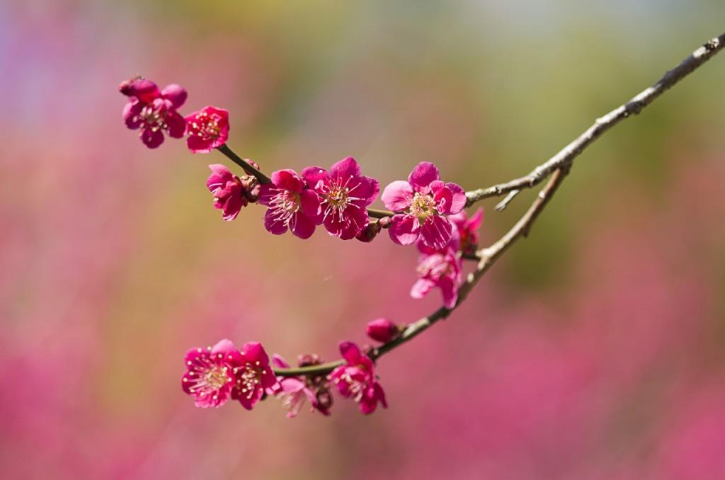 Spring_Flowering_trees_453044